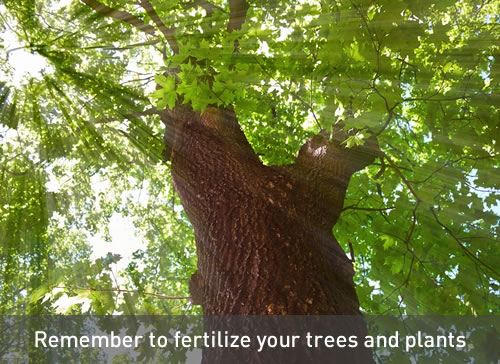 Fertilize Trees, Shrubs and Plantings